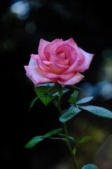 秋中の麗赤花…2