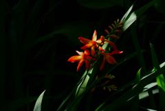 宝戒寺の紅花…