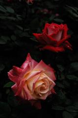 紅赤の麗花…
