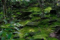 昔年の苔模様…