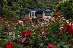 今春の花園…1