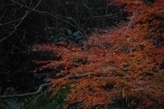 晩秋の鎌倉古道…9