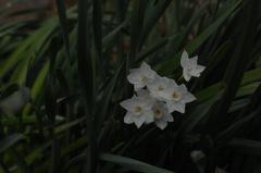 源氏山に咲く白磁色…