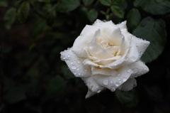 洋館の麗花…3