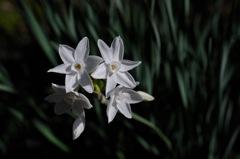 五山の白小花…