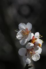 古刹の春息…3