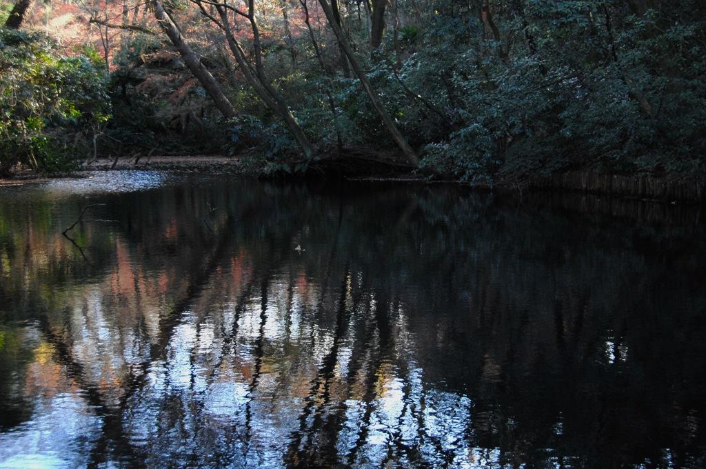 冬到来の池模様…