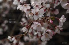 四季の寺花…5