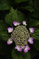 古都の七色花…4
