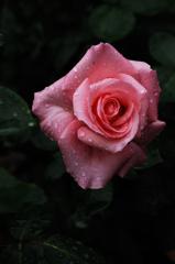 春彩の麗花…5
