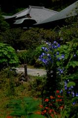 瑞泉寺の夏色…1