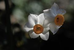 瑞泉寺の白磁色…1