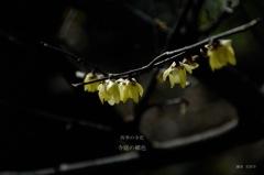 四季の寺花…2