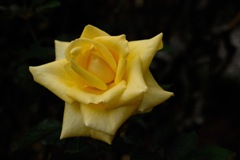 秋雨の麗花…8