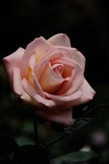 古都の春麗花…10