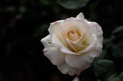 古都の春麗花…5