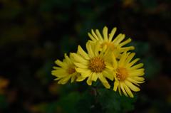 古刹の冬小花…