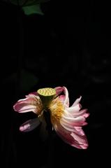 仏門の残花…