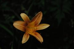 古刹の禅庭花…
