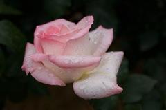 今春の花園…3