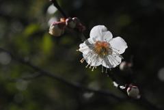 早春の五山…3