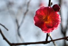 新春の彩り…4