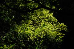 古刹の緑景…2