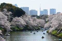 千鳥ヶ淵の桜①