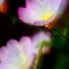 親水緑道の花