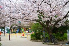 桜のある公園