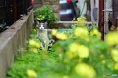 カタバミの庭に猫1匹