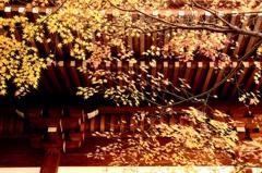 軒下の晩秋