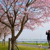 桜と美女とワンちゃんと