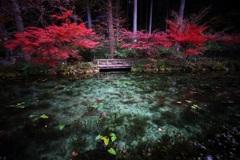 モネの池 秋