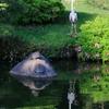 清澄庭園 亀と野鳥