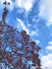 red in the blue sky〜青空に紅葉