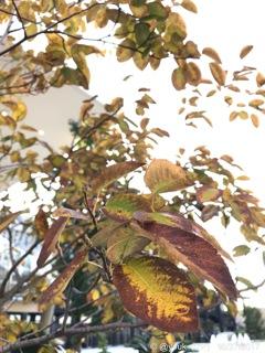 彩り枯れゆく〜紅に染まったこのオレ紅葉〜autumn in leaves