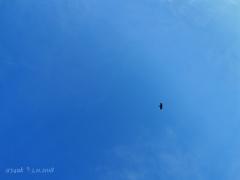 17:19 BlueSky Blue -if bird- 青空よ遠い人に伝えて…