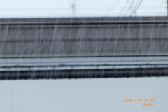 11:05 春分の日、まさかの大雪3℃〜振り落ちる雪たち〜シャッター優先