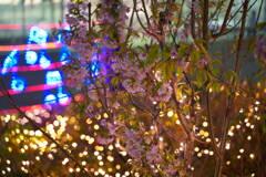 冬桜イルミネーション