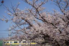 亀戸中央公園 2