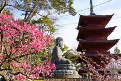 梅と桜と大仏に五重塔
