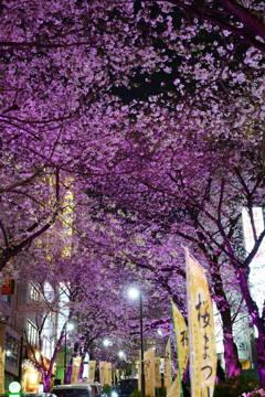 渋谷桜丘桜まつり 終