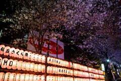 渋谷桜丘桜まつり 4