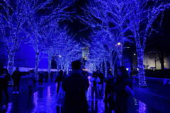 青の洞窟 1