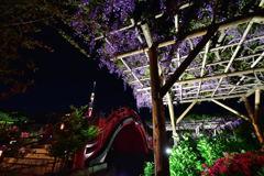亀戸天神社 10