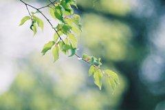花散り、緑鮮やか