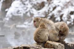 snow monkey ⑤