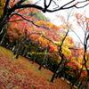 ☆雨上がりの秋♪