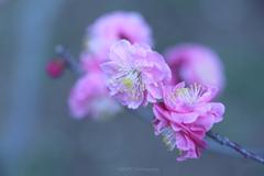 Bloom gracefully